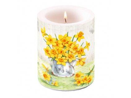 Svíčka dvouplášťová Narcissus